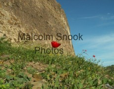 Poppy outside fort at Alcoutim