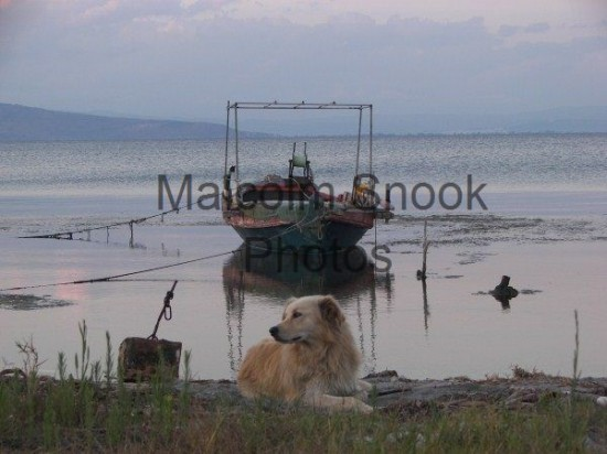 Fishing Boat And Dog Prevaza